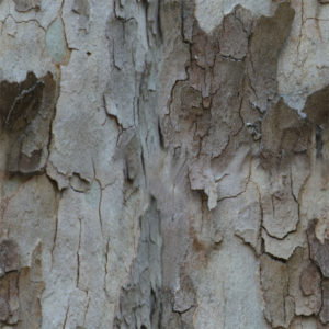 текстура коры дерева бесшовная